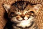 Kitten smile